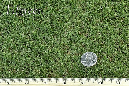 West Coast Turf Tifgreen 328 Sample