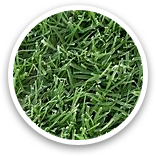 West Coast Turf Tifway 419 Bermuda Sample Thumbnail