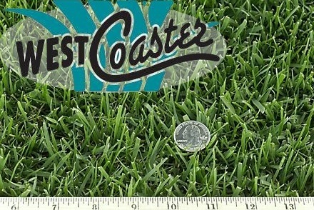 West Coaster Dwarf Tall Fescue Sample