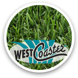 West Coaster Dwarf Tall Fescue Sample Thumbnail