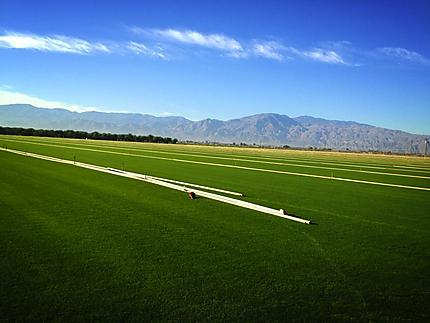 Growing California Sod for Rose Bowl