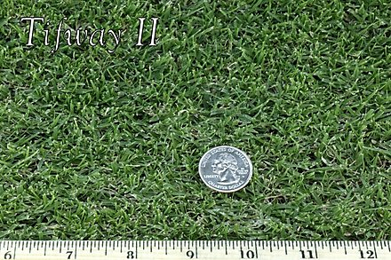 West Coast Turf Tifway II Bermuda Sample