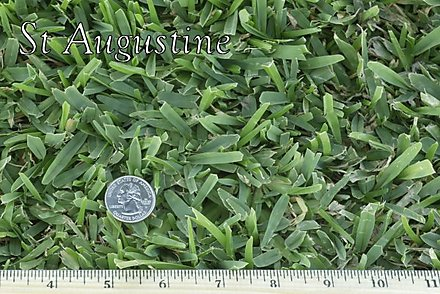 West Coast Turf St Augustine Sod Grass In Arizona